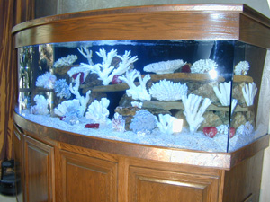400 gallon Bowfront Aquarium