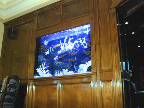 300 Gallon In-Wall Marine Fish Tank, Aquarium Design, Marine Aquariums ...