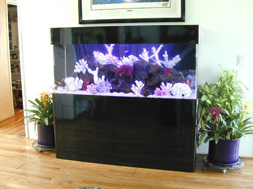 Black Laminate Stand And Canopy Visit The Aquarium Design Home Page
