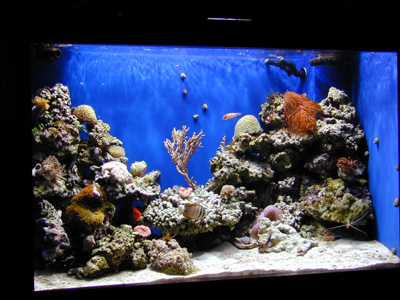 Interior of tank after four months ( livestock and service provided by ... 10 Gallon Fish Tank Stand Metal