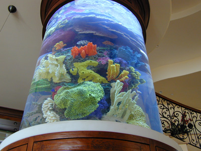 how to remove algea and build up on aquarium glass
