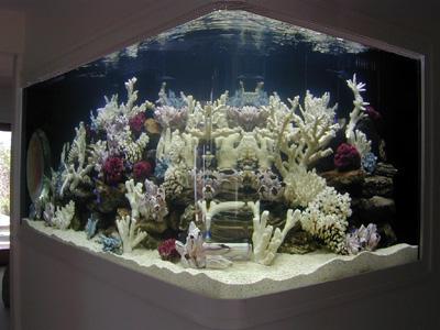 500 Gallon U0027 Lu0027 Shaped Marine Fish Tank, Aquarium Design, Marine Aquariums  And Coral Reef Aquarium Tank, Stand, Canopy, And Aquarium Filter System