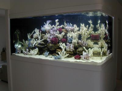 saltwater fish tank 500 gallon 500 gallon aquarium parga 2017 fish tank maintenance. Black Bedroom Furniture Sets. Home Design Ideas