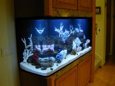176 Gallon Bent Corner Tank, Aquarium Design, Marine Aquariums And Coral  Reef Aquarium Tank, Stand, Canopy, And Aquarium Filter System