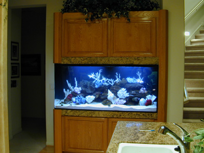 Visit The Aquarium Design Home Page
