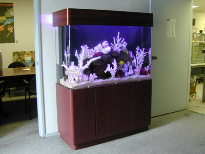 100 Gallon Uni Quarium Marine Fish Tank Aquarium Design