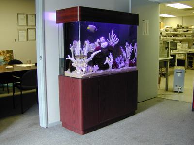 100 Gallon Uni Quarium Marine Fish Tank Aquarium Design