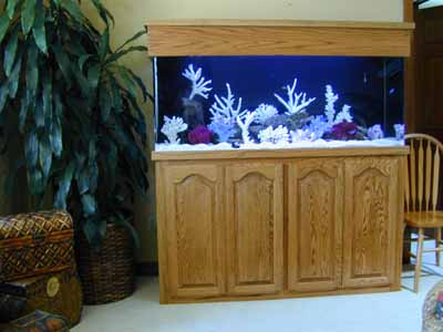 125 Gallon Marine Fish Tank Aquarium Design Aquariums And