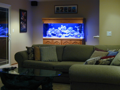 125 Gallon Soft Coral Reef Tank Aquarium Design Marine Aquariums And Stand Canopy Filter System