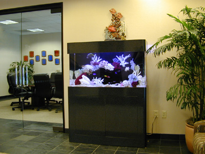 90 gallon marine fish tank aquarium design marine for 90 gallon fish tank stand