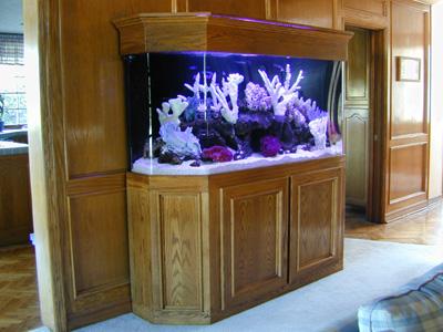 160 gallon flatback hexagon marine fish tank aquarium for 30 gallon hexagon fish tank