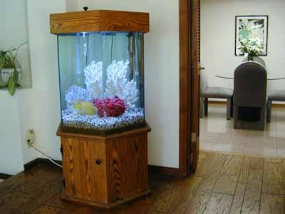 75 Gallon Hexagon Marine Fish Tank Aquarium Design Marine Aquariums And Coral Reef Aquarium Tank Stand Canopy And Aquarium Filter System