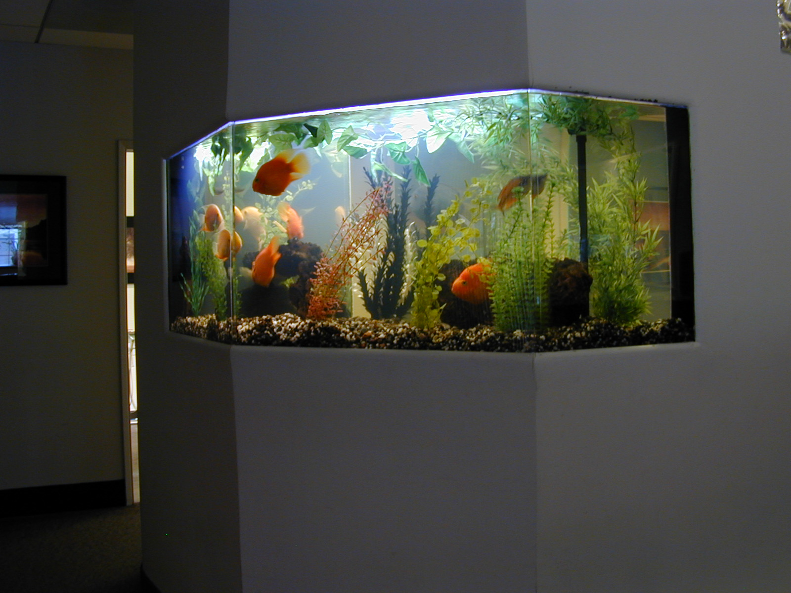 125 gallon freshwater fish tank aquarium design marine for Aquarium design
