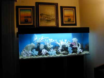 100 gallon marine fish tank aquarium design marine for 20 gallon fish tank dimensions