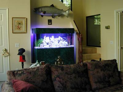 60 gallon marine fish tank aquarium design marine for 60 gallon fish tank