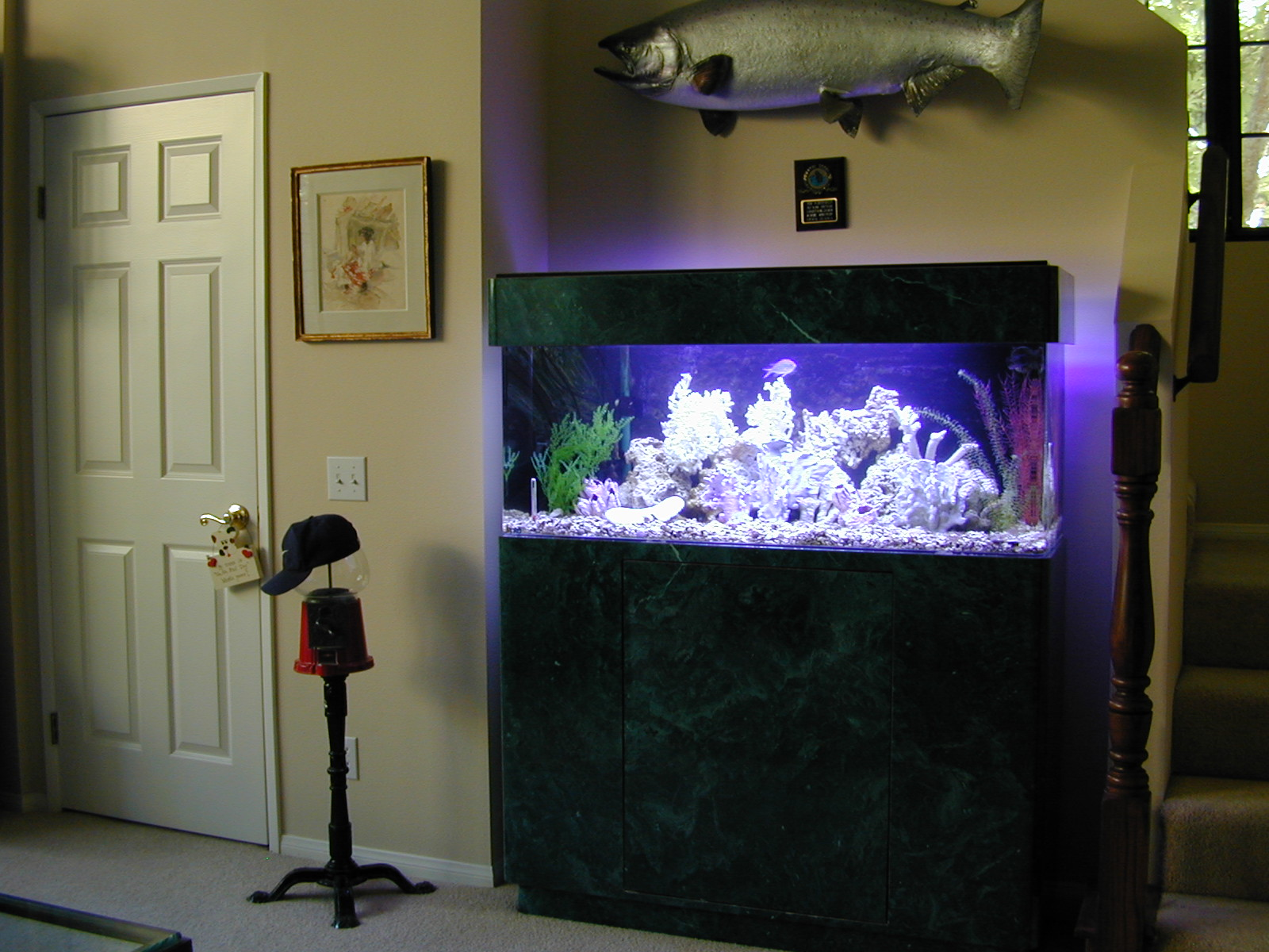 60 Gallon Marine Fish Tank Aquarium Design Marine Aquariums and Coral Reef Aquarium Tank Stand Canopy and Aquarium Filter System & 60 Gallon Marine Fish Tank Aquarium Design Marine Aquariums and ...