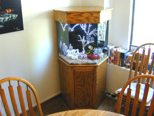 75 Gallon Hexagon Marine Fish Tank Aquarium Design