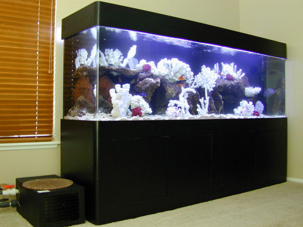300 gallon saltwater fish tank aquarium design marine