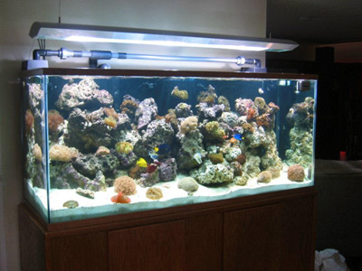 225 glass reef tank aquarium design marine aquariums and coral marine aquariums 400x300