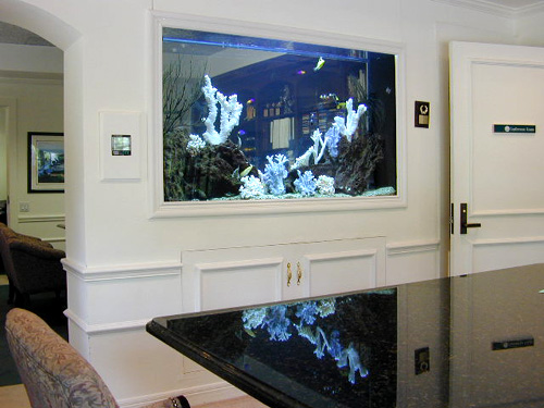 224 gallon marine fish tank aquarium design marine for Fish tank built into wall