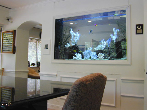 Fans vr 46 fish tank wall for Fish tank built into wall